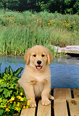 PUP 08 FA0001 01