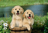 PUP 08 FA0005 01