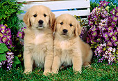 PUP 08 FA0009 01
