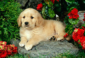 PUP 08 FA0014 01