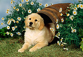 PUP 08 FA0015 01