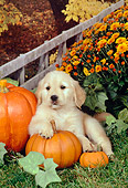 PUP 08 FA0017 01