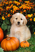 PUP 08 FA0018 01