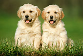 PUP 08 GR0001 01