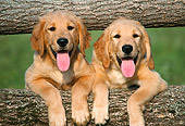 PUP 08 GR0014 01