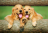 PUP 08 GR0014 03