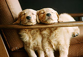 PUP 08 GR0028 01