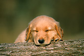 PUP 08 GR0035 01