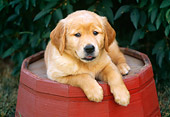 PUP 08 GR0044 01