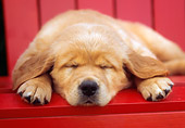 PUP 08 GR0046 01