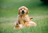 PUP 08 GR0050 01
