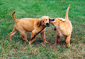 PUP 08 GR0052 01