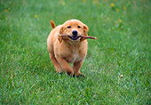 PUP 08 GR0053 01