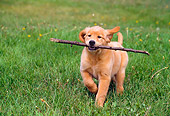 PUP 08 GR0054 01