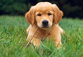 PUP 08 GR0060 01