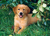PUP 08 GR0063 01