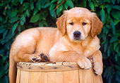 PUP 08 GR0066 01