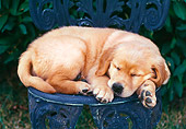 PUP 08 GR0067 01