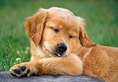 PUP 08 GR0068 01