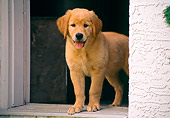 PUP 08 GR0069 01