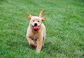 PUP 08 GR0071 01