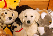 PUP 08 LS0001 01