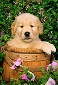 PUP 08 LS0003 01