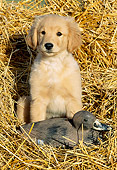 PUP 08 LS0009 01