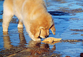 PUP 08 LS0010 01