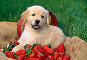 PUP 08 LS0012 01