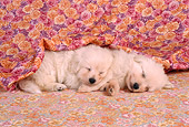 PUP 08 RC0001 01