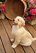 PUP 08 RC0006 01