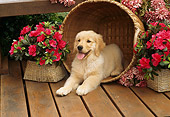 PUP 08 RC0007 01