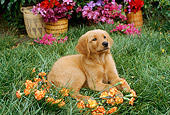 PUP 08 RC0013 01