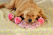 PUP 08 RC0015 01