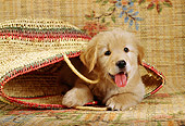 PUP 08 RC0016 01