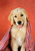 PUP 08 RC0018 01