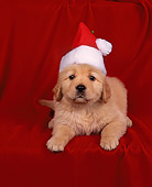 PUP 08 RK0007 08