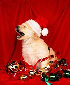 PUP 08 RK0011 01
