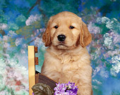 PUP 08 RK0039 01