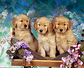 PUP 08 RK0045 06
