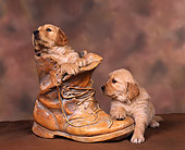 PUP 08 RK0085 06