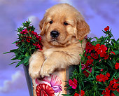 PUP 08 RK0100 04