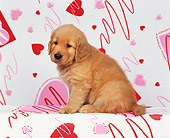 PUP 08 RK0101 02