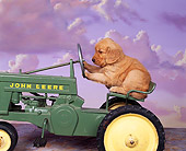 PUP 08 RK0103 06