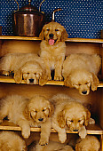 PUP 08 RK0127 31