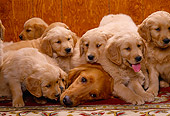 PUP 08 RK0128 16