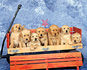 PUP 08 RK0174 09