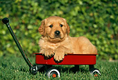PUP 08 RK0177 04