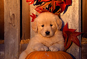 PUP 08 RK0185 02